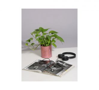 Ceramic Planter With U Shaped Metal Stand In Black Colour